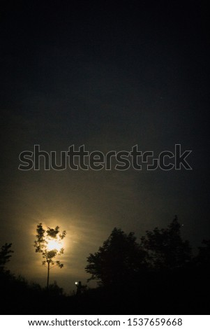 moonlight through alone tree with alone human #1537659668