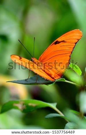 butterflies of all shapes and colors #1537756469