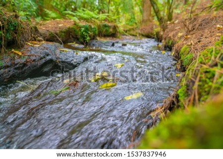 Small flowing stream washing leaves along as it flows through New Zealand bush. #1537837946