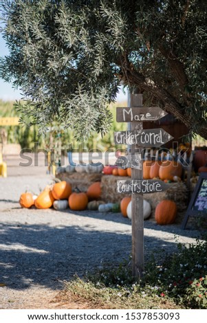 directional signpost in rural area with olive tree and group of pumpkins in background, pumpkin patch sign, fall season festivities