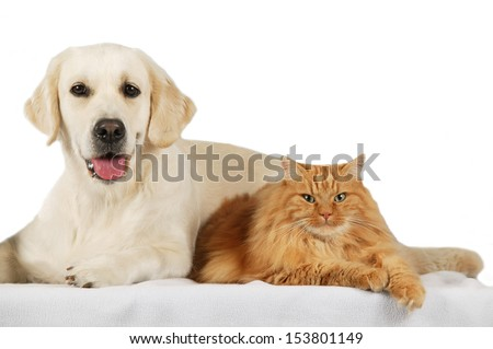 cat and dog                           #153801149