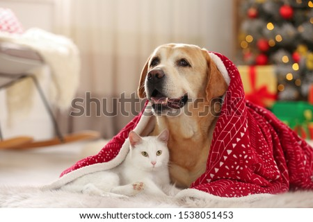 Adorable dog and cat together under blanket at room decorated for Christmas. Cute pets #1538051453