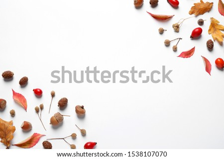 Beautiful composition with autumn leaves on white background, flat lay. Space for text #1538107070