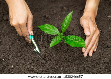 Hands of farmer growing and nurturing tree growing on fertile soil,  environment Earth Day In the hands of trees growing seedlings,  protect nature  #1538246657