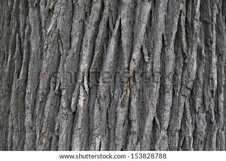 gray wood bark texture background #153828788