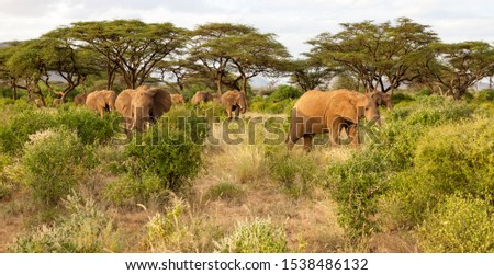 A lot of elephants go through the bushes in a jungle #1538486132