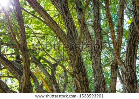 tree trunks and leaves on a sunny day. sunny day in nature. sunny day in the park. beauty in the summer park. Hot summer days. #1538593901