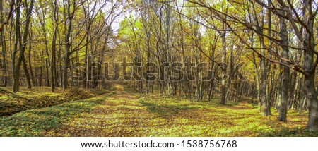 Dirt road in autumn day covered with fallen leaves #1538756768