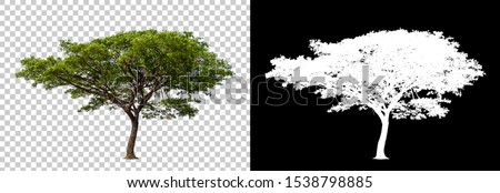 Isolated single tree. Big tree large image is easy to use and suitable for all types of art work and print.