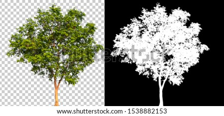 Isolated single tree with clipping path and alpha channel on a transparent picture background. Big tree large image is easy to use and suitable for all types of art work and print. #1538882153