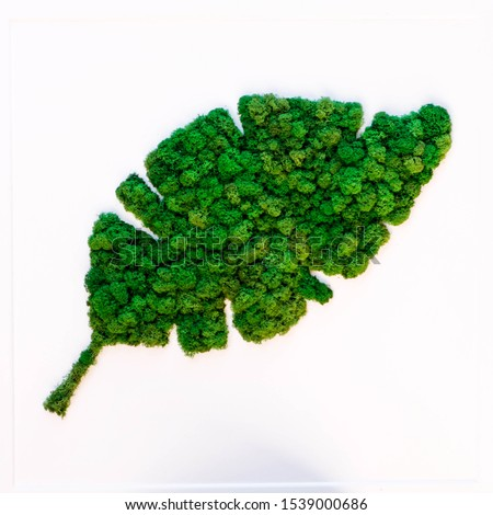 picture of stabilized green moss
