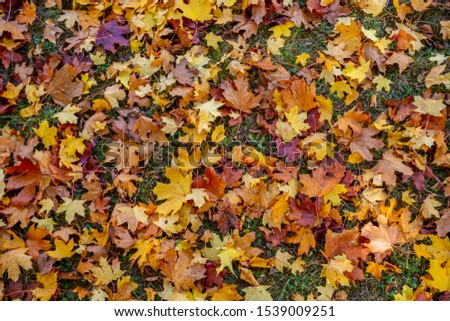 autumn leafs on forest floor  #1539009251