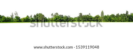 View of a High definition Treeline isolated on a white background #1539119048