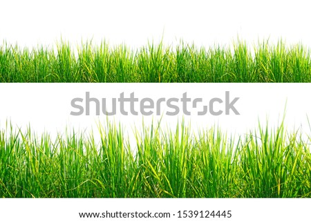 Green Grass Border isolated on white background.The collection of grass.(Manila Grass)The grass is native to Thailand is very popular in the front yard. #1539124445