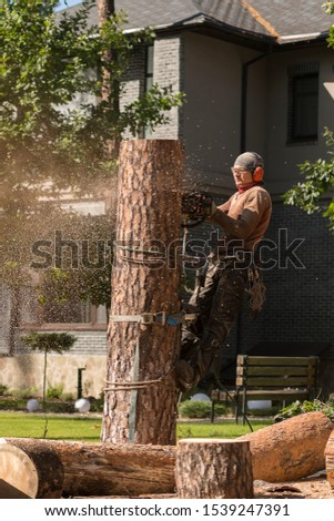Arborist cuts a dry, diseased tree on a site near the house. Security. #1539247391