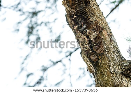 A picture of a hornet nest on a pine tree by the beach