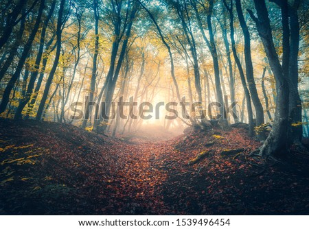 Path in beautiful forest in fog at sunrise in autumn. Colorful landscape with enchanted trees with orange and red leaves. Scenery with trail in dreamy foggy forest. Fall colors in october. Nature #1539496454