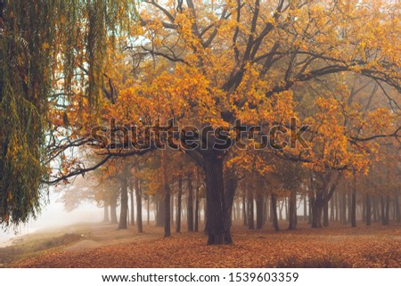 Old oak in the autumn forest. #1539603359