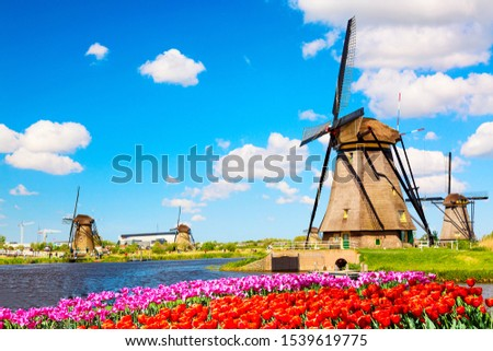 Colorful spring landscape in Netherlands, Europe. Famous windmills in Kinderdijk village with tulips flowers flowerbed in Holland. Famous tourist attraction in Holland #1539619775