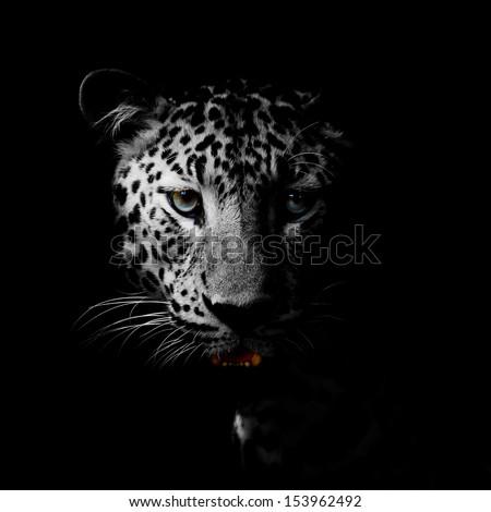 Leopard portrait #153962492