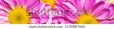 Spring flowers,Inscription Spring Time on background with spring flowers #1539887666
