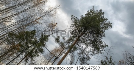 Trees in forest. Forest trees in the thicket. #1540147589
