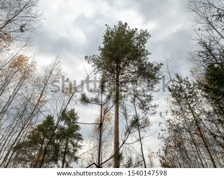 Trees in forest. Forest trees in the thicket. #1540147598