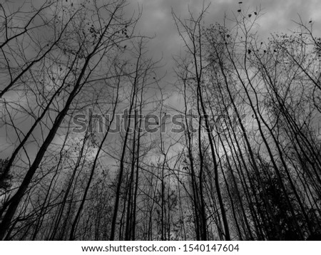 Trees in forest. Forest trees in the thicket. #1540147604