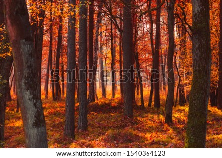 Autumn forest at misty warm fall morning light #1540364123