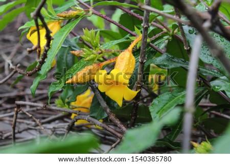 Rio de Janeiro, Brazil - Flowers and plants #1540385780