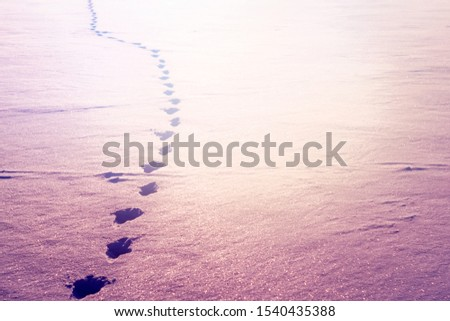footprints in the snow trail on a snowy lake. winter sport winter fishing hunting #1540435388