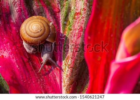 Snail crawling on leaf,Abstract drops of water on flower leaf ,Animal Shell, Clambering, Drop, Liquid,Drop, Plant, Raindrop, Rain, Macrophotography #1540621247