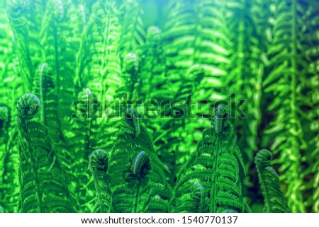 green forest fern abstract background #1540770137