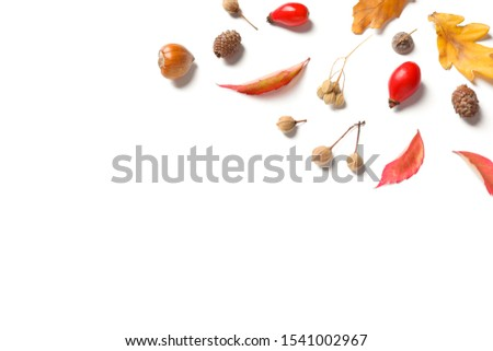 Beautiful composition with autumn leaves on white background, flat lay. Space for text #1541002967