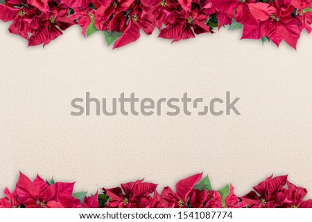 A poinsettia flower frame on the top and the bottom over a white surface - great for framing a lovely picture or text