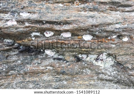 Abstract background from shells, The remains of shells for background, The remains of shells on the stone and the seashore, Shells old stone, the oysters attached on the rock at the seashore #1541089112