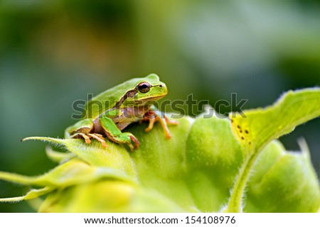 Green tree frog on a branch #154108976