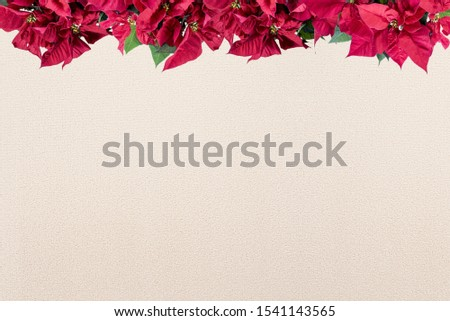 A poinsettia flower frame on the top over a white surface - great for framing a  picture or text