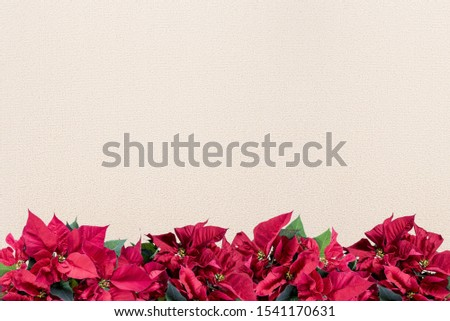 A poinsettia flower frame on the bottom over a white surface - great for framing a picture or text