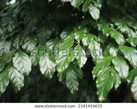 green leaf background botany limb botany #1541414633