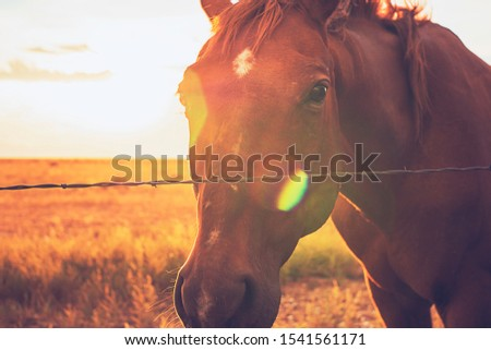 Chestnut Horse At Sunset In Western Landscape Through Barbed Wire Fence  #1541561171