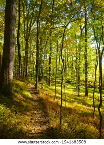 Scenic view of a hiking trail going through a forest in Maryland with the sun shining. #1541683508