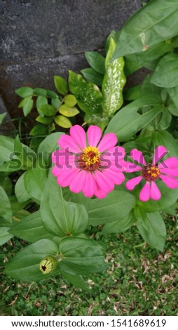 beautiful and beautiful pink flowers that are fresh and attractive #1541689619