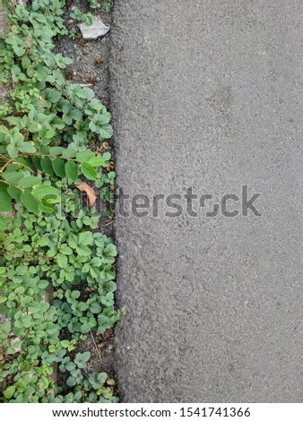 Closeup Picture of Small Wild Plants beside Asphalt Road Side by Side #1541741366