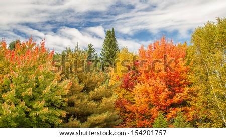 Colorful Autumn foliage #154201757