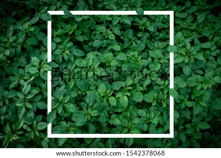 Nature Minimal Concept - Green Leaves Background with White Paper Frame. Flat Lay  #1542378068