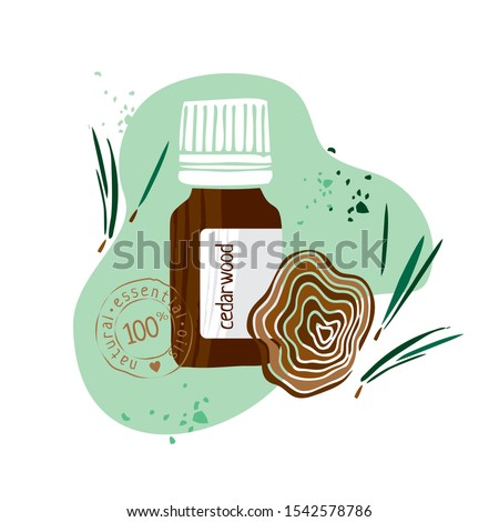 Bottle with cedarwood essential oil drawn by hand on a white background. Aromatherapy, cosmetics, folk and alternative medicine. Sign to labels, banner, a symbol in the booklet. Vector illustration #1542578786