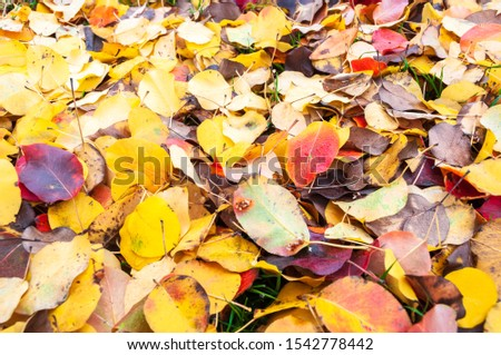 bright background of fallen autumn leaves #1542778442