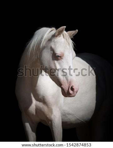 Portrait of a beautiful white horse looks back on black background isolated #1542874853