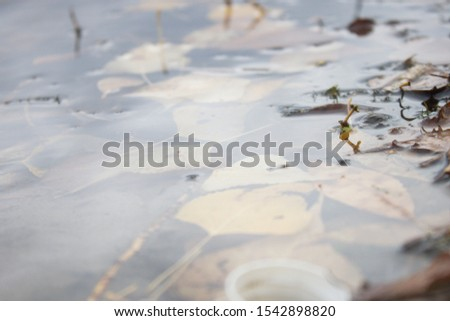 Fallen leaves under the water with reflections near the green sprouts #1542898820